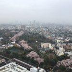Sakura, Japanese soul flower